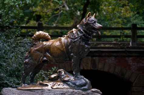 The Story Behind Balto, Central Park's Famous Siberian